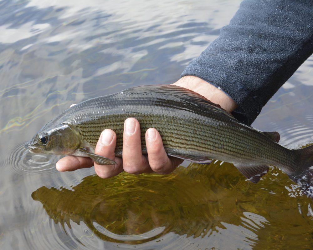 Fiska harr Järjagården fiskepaket fiskeweekend